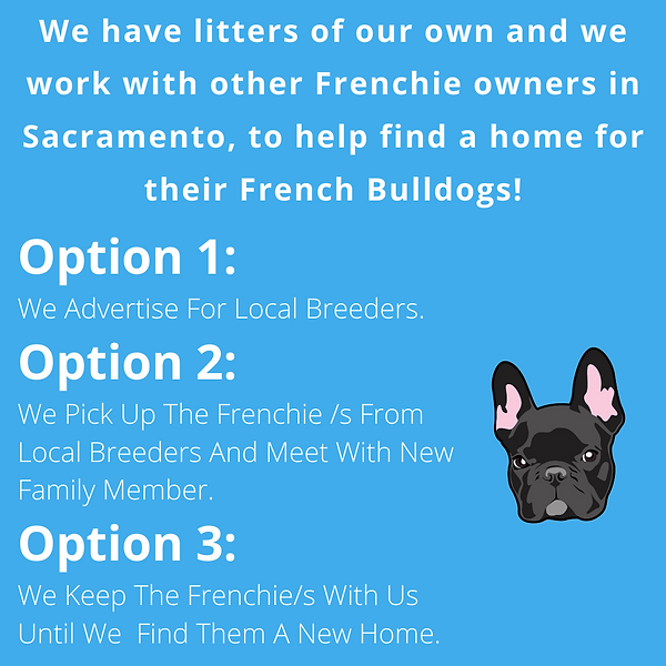 Options banner.png