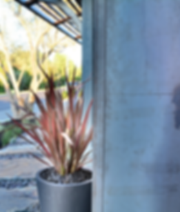 Pleasanton Contemporary Front Yard - Ridgecrest Designs