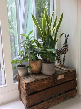 Wij houden van planten!