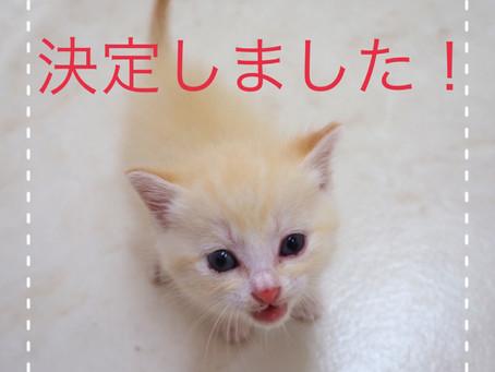 【決定しました】子猫ちゃんの里親募集2021-①