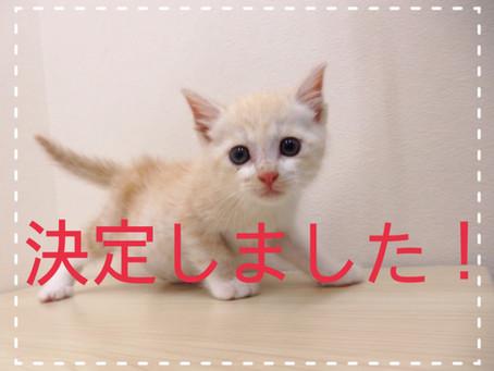【決定しました!】子猫ちゃんの里親募集⑪