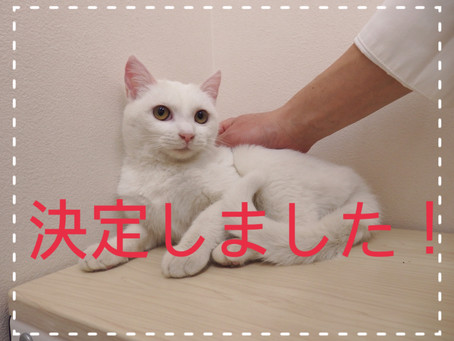 【みんな決定!】若猫ちゃんの里親募集②