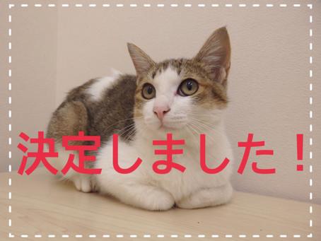 【全員決定!】若猫ちゃんの里親募集㉙
