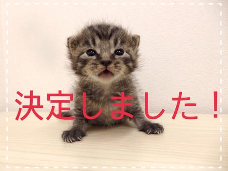 【決定しました!】子猫ちゃんの里親募集⑰
