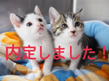 【内定しました】子猫ちゃんの里親募集㊱