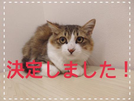 【決定しました!】若猫ちゃんの里親募集㉜