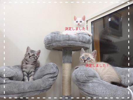 【2匹決定!】子猫ちゃんの里親募集⑤