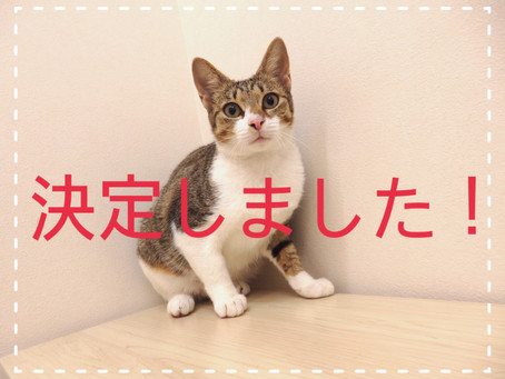 【決定しました!】若猫ちゃんの里親募集⑯