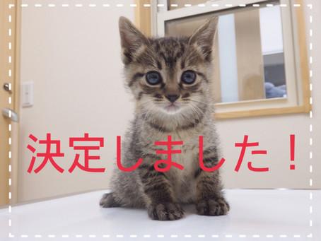 【決定!】子猫ちゃんの里親募集③