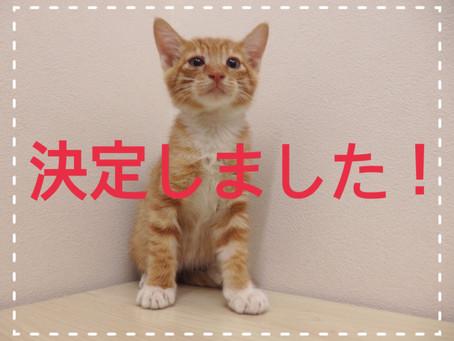 【里親決定!!】子猫ちゃんの里親募集㉚