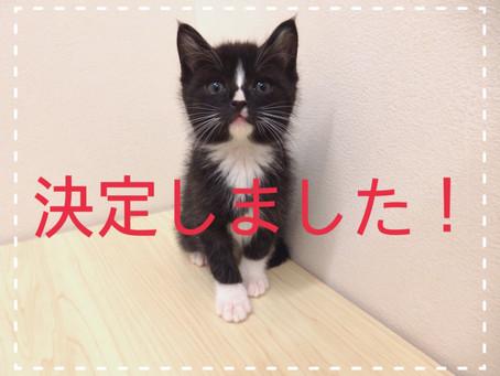 【決定しました!】子猫ちゃんの里親募集⑱