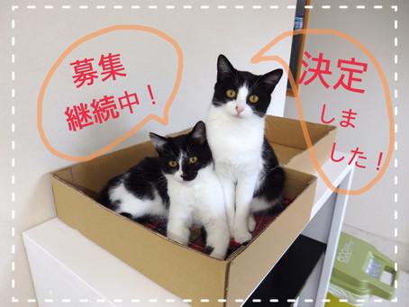 【1匹決定!】猫ちゃんの里親募集⑲