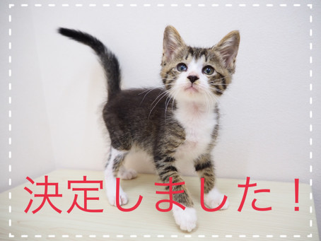【決定しました!】子猫ちゃんの里親募集2021⑧