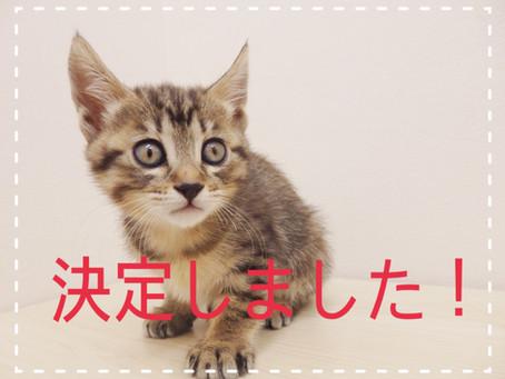 【決定しました!】子猫の里親募集①