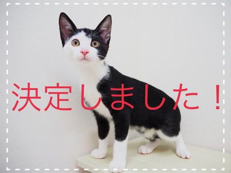 【決定しました】子猫ちゃんの里親募集2021⑩