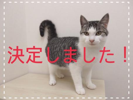 【決定!】子猫ちゃんの里親募集㉒