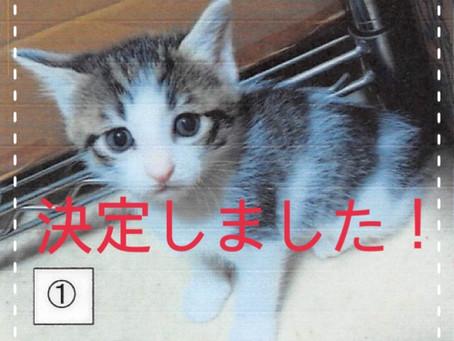 【決定しました!】子猫ちゃんの里親募集⑩