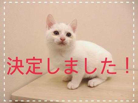 【決定しました!】子猫ちゃんの里親募集㉑