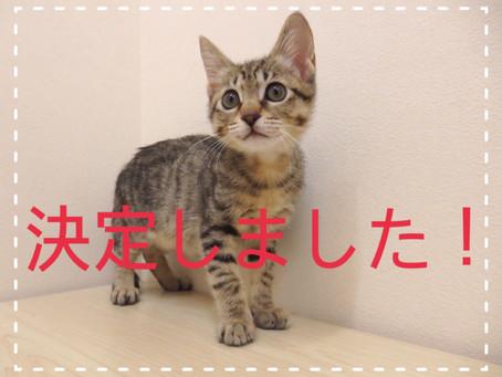 【決定しました!】子猫ちゃんの里親募集⑬