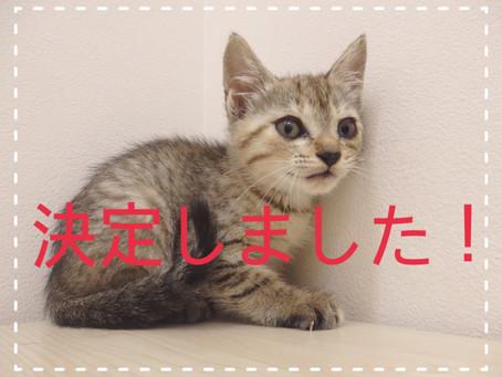 【決定しました!】子猫ちゃんの里親募集⑨