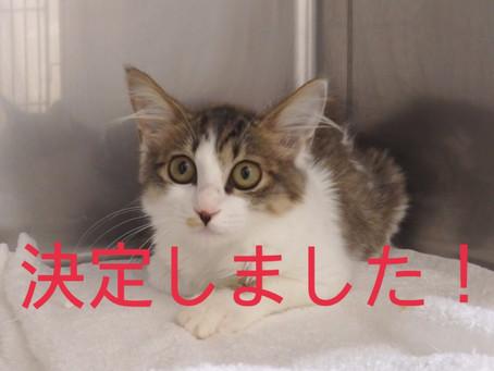 【決定!】子猫ちゃんの里親募集㉖