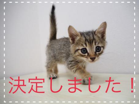 【決定しました】子猫ちゃんの里親募集2021⑬