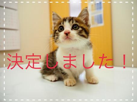 【決定しました】子猫ちゃんの里親募集⑪
