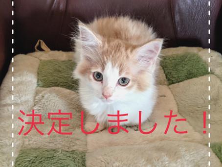 【決定しました】子猫ちゃんの里親募集2021⑤