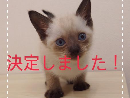 【決定しました!!】子猫ちゃんの里親募集㉗