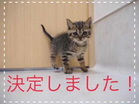 【決定しました】子猫ちゃんの里親募集2021-②
