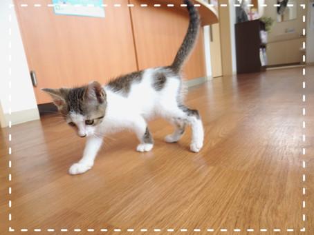【続:動画あり】子猫ちゃんの里親募集⑭
