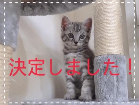 【決定しました!】子猫ちゃんの里親募集⑤&⑦