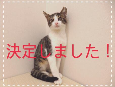 【決定!】子猫ちゃんの里親募集㉕