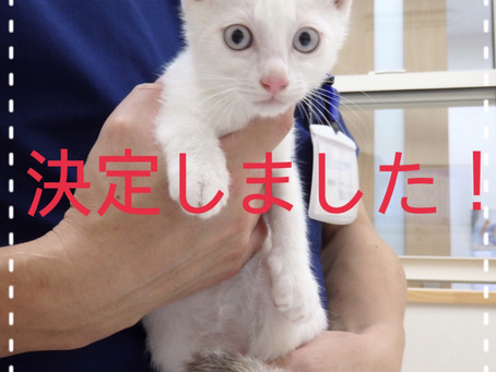 【決定!】子猫ちゃんの里親募集㉔