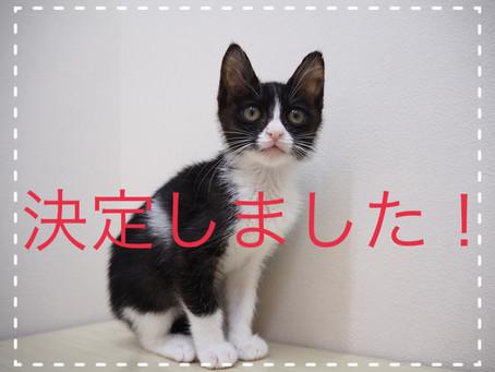 【決定しました!】子猫ちゃんの里親募集2021⑥