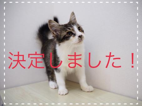 【決定しました】子猫ちゃんの里親募集2021⑫