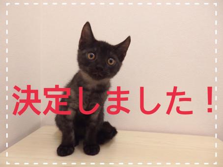 【決定!】子猫ちゃんの里親募集㉛