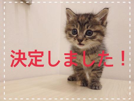 【全員決定しました】子猫ちゃんの里親募集㉝