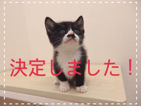 【決定しました!】子猫ちゃんの里親募集⑮