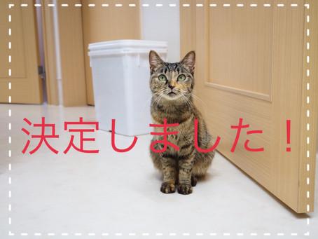 【決定しました】若猫ちゃんの里親募集2021⑦