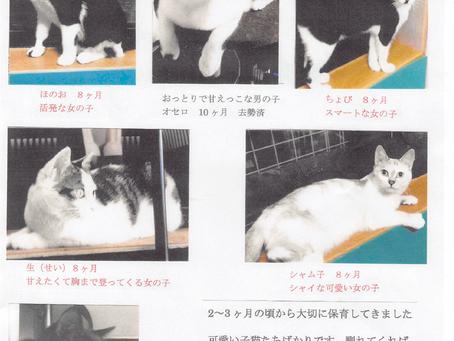【画像更新】猫ちゃんの里親募集