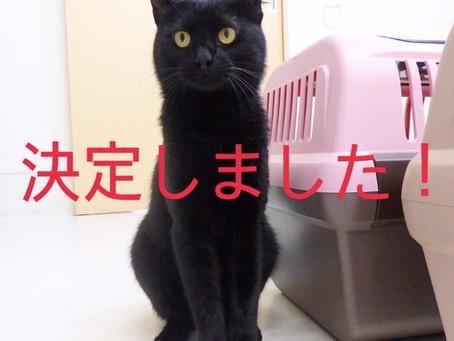 【決定しました!】猫ちゃんの里親募集㉘