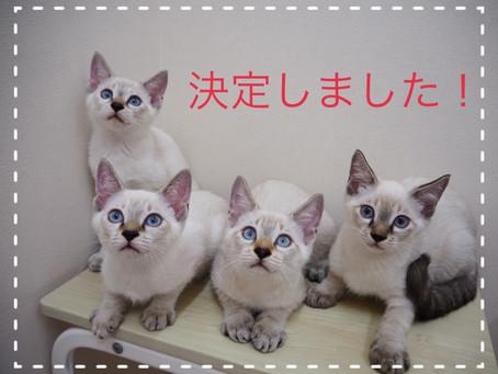 【決定しました】子猫ちゃんの里親募集2021⑨