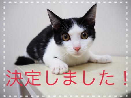 【決定しました】猫ちゃんの里親募集⑮