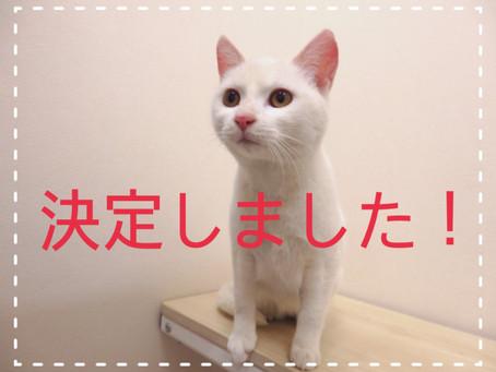 【1匹決定!】若猫ちゃんの里親募集②