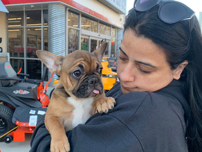 Raquel with her girl Franceschi Frenchies Penny at Landenberg Tractor Supply