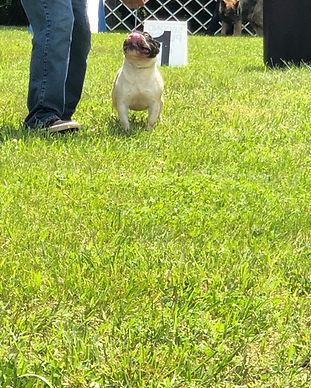 Pebbles Dog Show 5.JPG