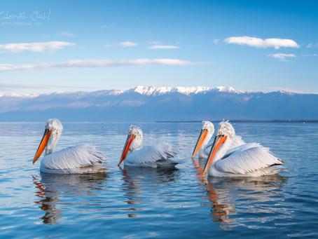 Za pelikány na sever Řecka
