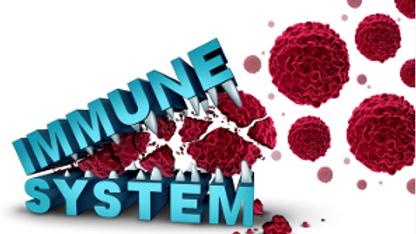 immunsystem.png