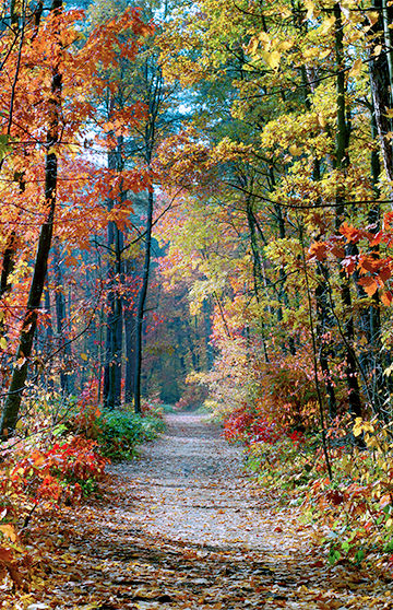 Peaceful Path - Dr. Robin Wachs, Clinical Psychologist, Therapist, Stamford, CT